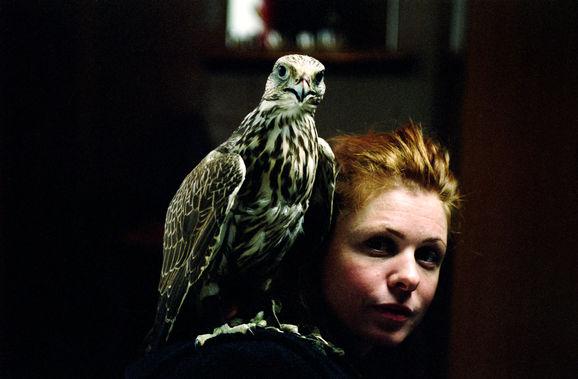 Falcon_Still16