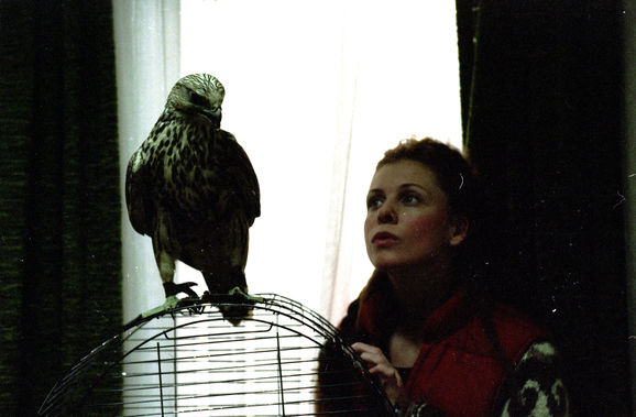 Falcon_Still25